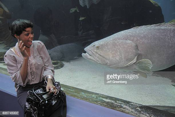 A woman smiling at a Goliath Grouper