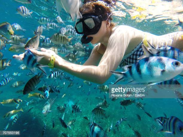 Woman Snorkeling Amidst Fishes Undersea