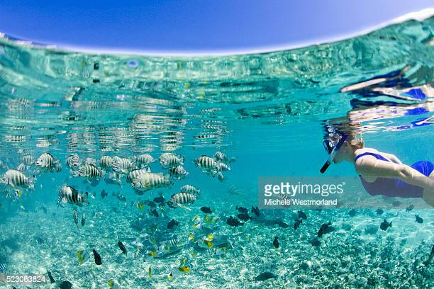 Woman Snorkeling Among Tropical Fish in Bora-Bora Lagoon