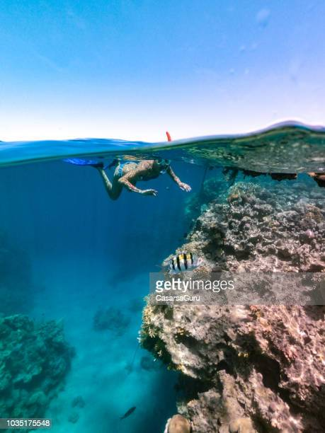 woman snorkeling at coral reef , red sea - red sea stock pictures, royalty-free photos & images