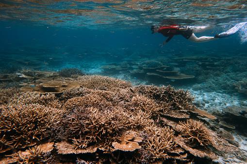 Woman snorkeling over lush coral reef in Japan, Miyakojima Island, Okinawa - gettyimageskorea