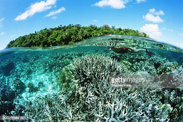 Woman snorkeling over shallow coral reef, surface view