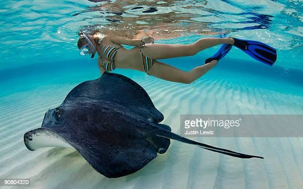 woman snorkeling with a southern stingray - stingray stock photos and pictures