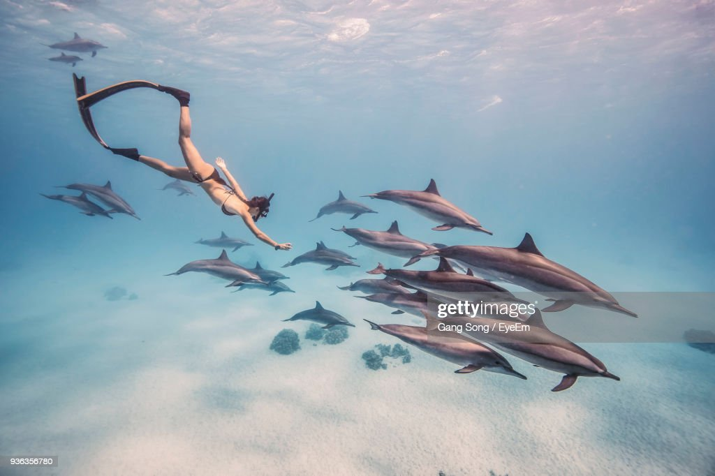 Woman Snorkeling With Fishes Underwater : Stock Photo
