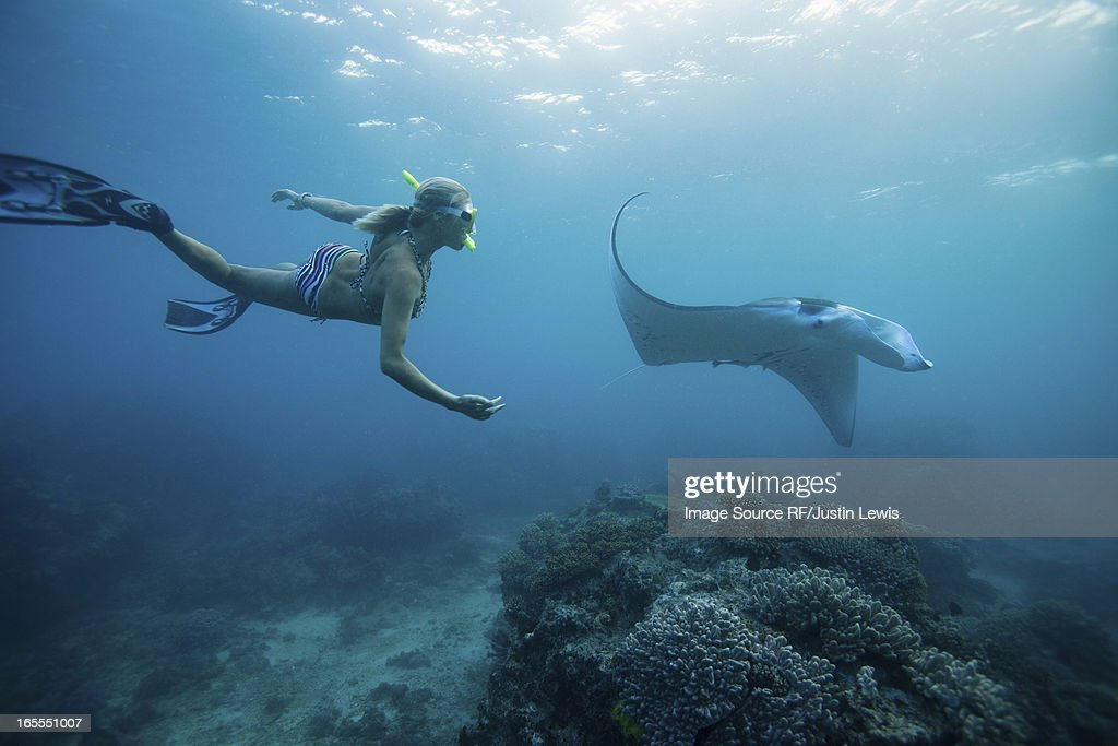Woman snorkeling with ray underwater : Stock Photo