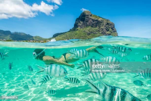 woman snorkeling with tropical fish, indian ocean, mauritius - islas mauricio fotografías e imágenes de stock