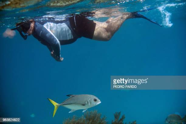 A woman snorkels at the Hol Chan Marine Reserve coral reef in the outskirts of San Pedro village in Ambergris Cay Belize on June 7 2018 Backed by...