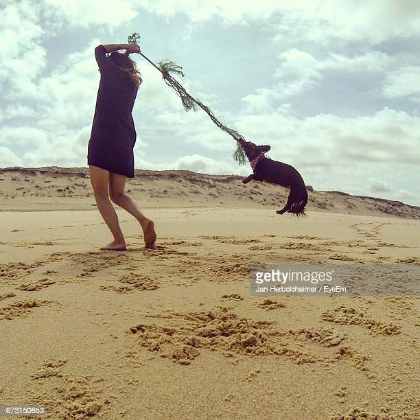 woman spinning chihuahua with rope on sand at beach against sky - lap dog stock pictures, royalty-free photos & images
