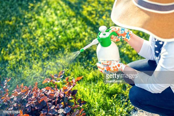 woman spraying flowers in the garden - spraying stock pictures, royalty-free photos & images
