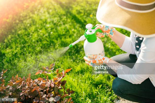 woman spraying flowers in the garden - crop sprayer stock pictures, royalty-free photos & images