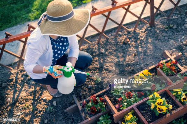 woman spraying flowers in the garden - crushed leaves stock pictures, royalty-free photos & images