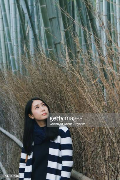 woman standing against bamboos - chanayut stock photos and pictures