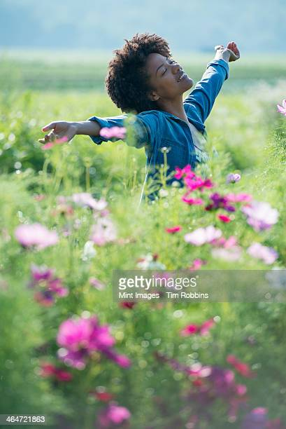 a woman standing among the flowers with her arms outstretched.  pink and white cosmos flowers. - loslassen aktivitäten und sport stock-fotos und bilder
