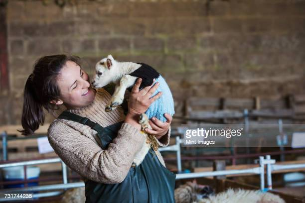woman standing in a barn, holding a newborn lamb dressed in a knitted jumper. - tricoté photos et images de collection