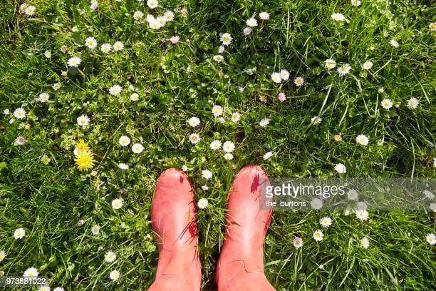 woman standing in red rubber boots in a meadow with daisy flowers - low section stock pictures, royalty-free photos & images
