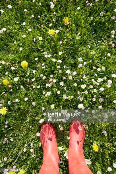 woman standing in red rubber boots in a meadow with daisy flowers - jardin fleuri photos et images de collection