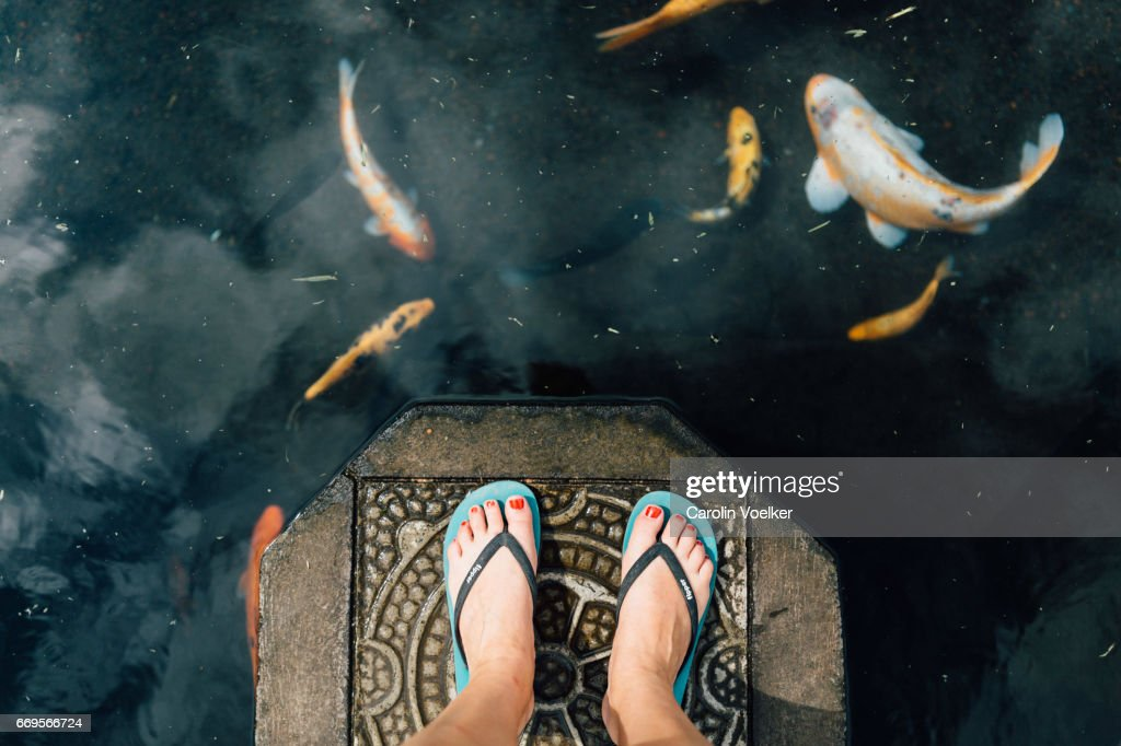 Woman standing on a stone in a koi pond : Stock Photo