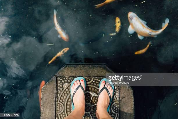 woman standing on a stone in a koi pond - koi carp - fotografias e filmes do acervo