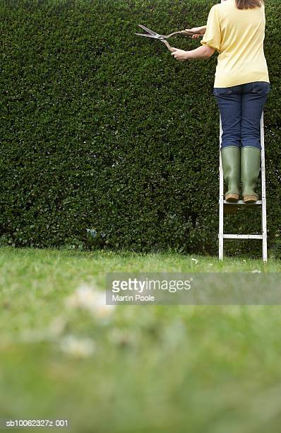 Woman standing on ladder,  trimming hedge with hedge clippers, rear view