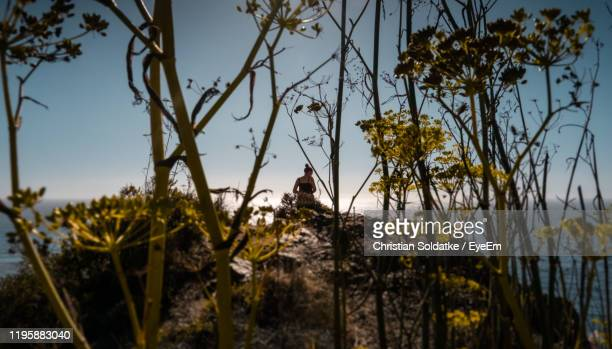 woman standing on land seen through trees - christian soldatke stock pictures, royalty-free photos & images