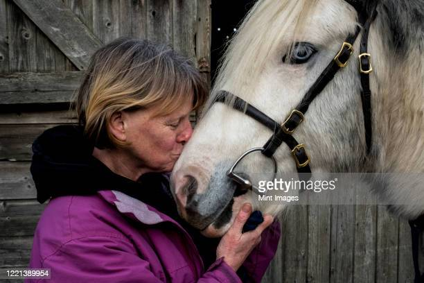 woman standing outside stable, kissing white cob horse. - herbivorous stock pictures, royalty-free photos & images