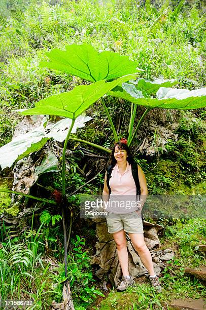 woman standing under the giant leaves of a tropical plant - ogphoto stock photos and pictures