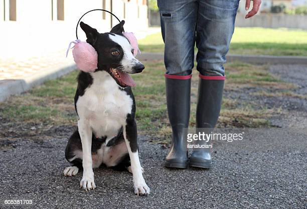 Woman standing with Dog wearing pink ear muffs