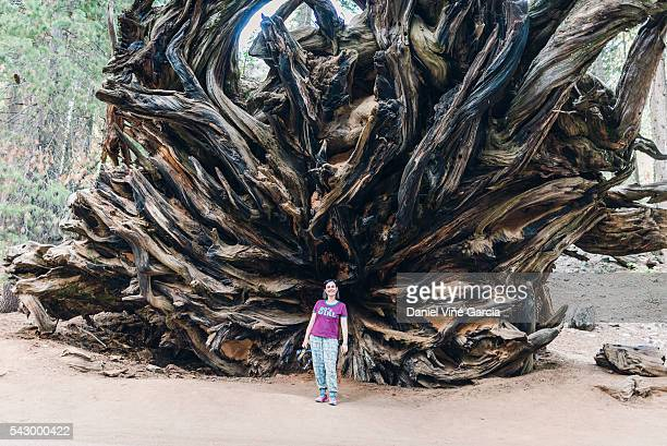 A woman stands beside the stump of a fallen giant Sequoia tree at the Sequoia National Park