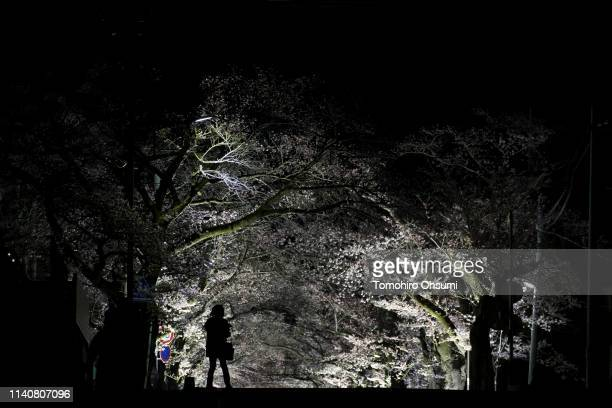 A woman stands in front of cherry trees in bloom outside the difficulttoreturn zone in the Yonomori area at night on April 6 2019 in Tomioka...