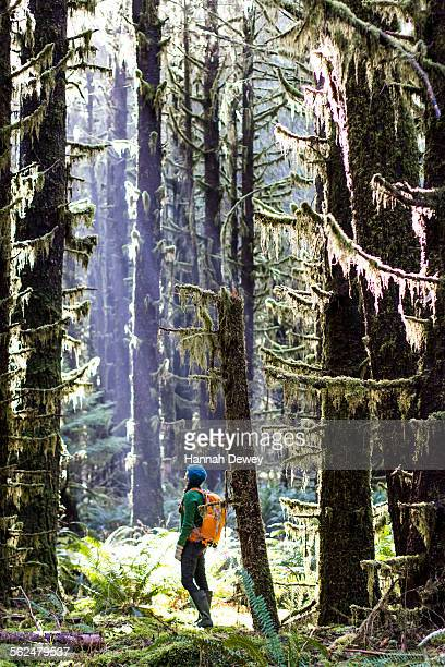 Woman stands looking up at the tall trees of the Hoh Rainforest, WA