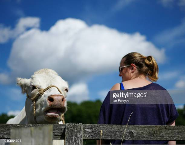 A woman stands next to a cow as it is tethered to a fence during 152nd the Ryedale Country Show on July 31 2018 in Kirbymoorside England Held in...