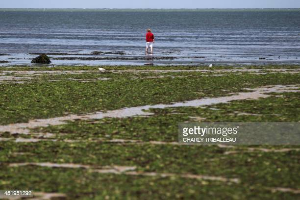 A woman stands on a beach covered in green algae in GrandcampMaisy northwestern France on July 9 2014 The green algae which plagues the beaches of...