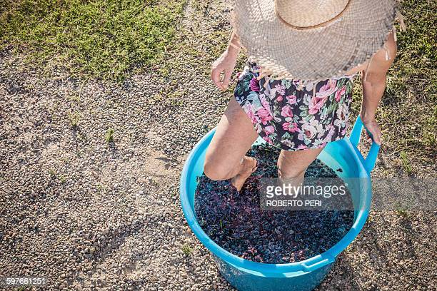 Woman stomping grapes in bucket, Quartucciu, Sardinia, Italy