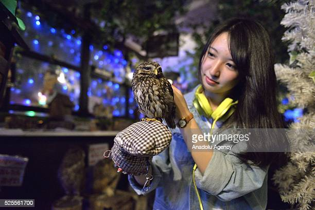 A woman strokes a scop owl in an Owl Cafe the Forest of Owl in Akihabara district of Tokyo Japan on April 27 2016 The OwlCafe phenomenon grew up in...