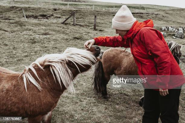 woman strokes a shetland pony - horse stock pictures, royalty-free photos & images