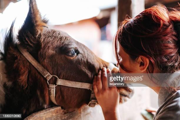 安定した彼女の茶色の子馬をなでてキスする女性 - 動物調教師 ストックフォトと画像