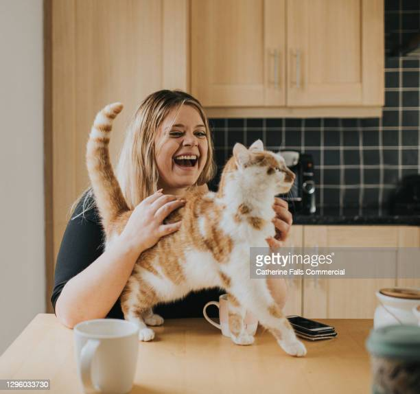 woman stroking cat on a kitchen table - approaching stock pictures, royalty-free photos & images