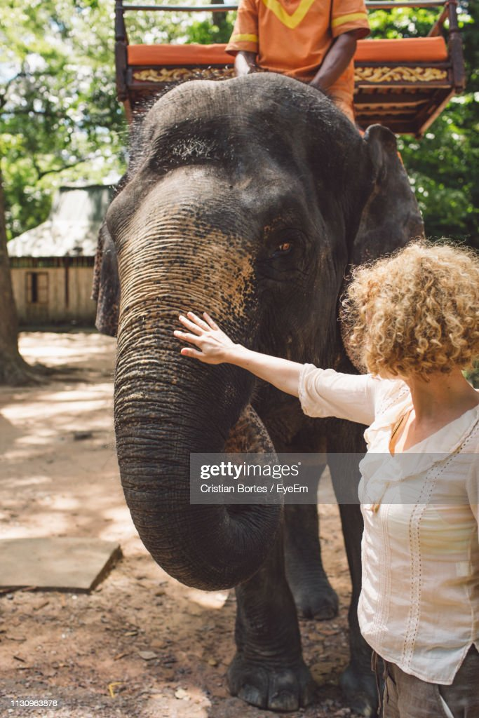 Woman Stroking Elephant In Park : Stock Photo