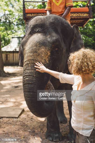 woman stroking elephant in park - bortes stock photos and pictures