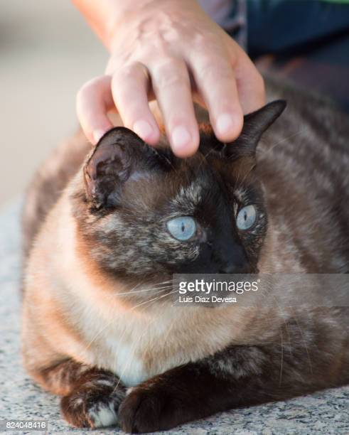 Woman stroking stray cat