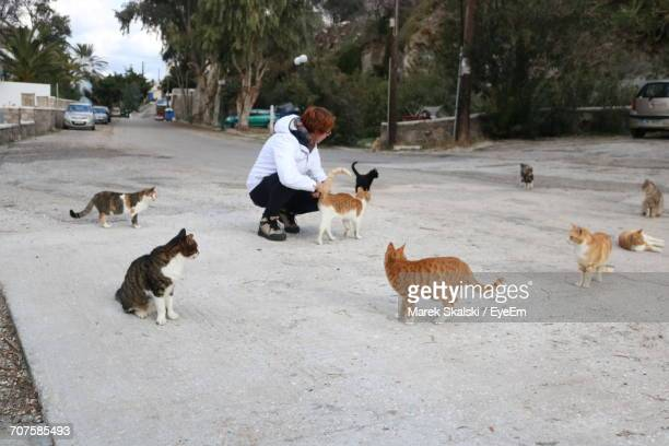 woman surrounded with cats crouching on street against trees - surrounding stock pictures, royalty-free photos & images