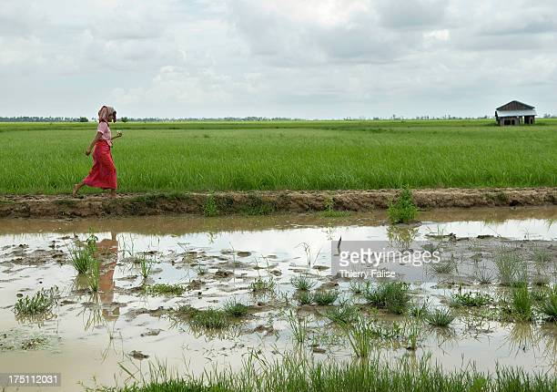 A woman survivor of cyclone Nargis walks in a ricefield According to official figures the cyclone killed about 140000 people on May 2 and 3 2008