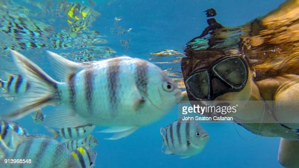 woman swimming underwater in el nido - damselfish stock photos and pictures