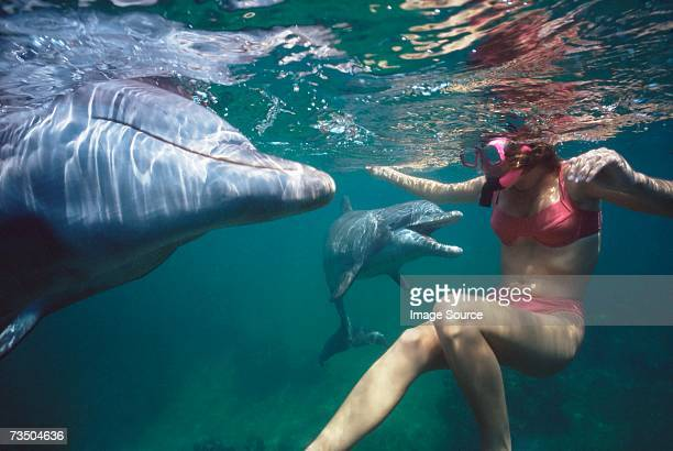 woman swimming with dolphins - dolphin stock pictures, royalty-free photos & images
