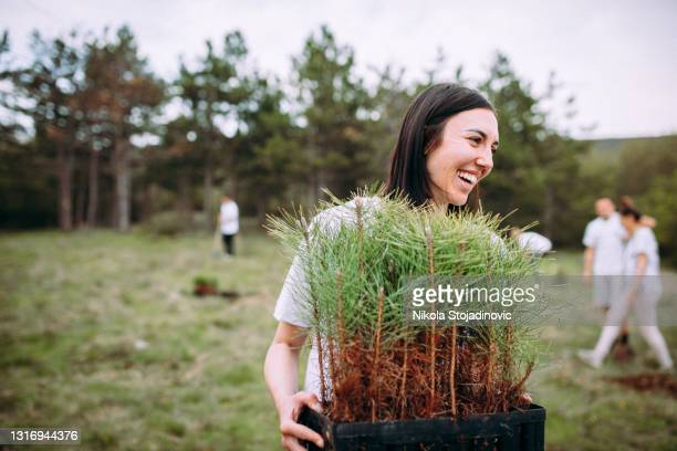 woman take care of cypress plants - tree stock pictures, royalty-free photos & images