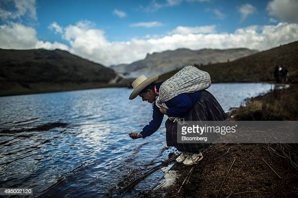 A woman takes a drink from the El Perol lagoon in Conga Peru Tuesday Oct 20 2015 Local environmentalists claim the nearby Yanacocha mine diverts and...