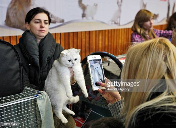 Woman takes a photo of a cat during the International Cat Show in Kiev, Ukraine, on January 28, 2017.The show presents more than 20 breeds of cats,...
