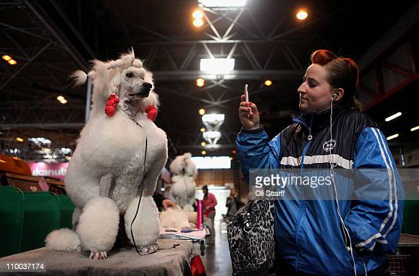 Woman takes a photo of a poodle dog on her mobile phone on the final day of the annual Crufts dog show at the National Exhibition Centre on March 13,...