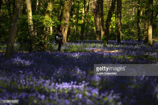 Woman takes a photo of bluebells in the woods at Wanstead on April 15, 2020 in London, England. The Coronavirus pandemic has spread to many countries...