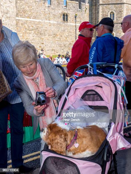 A woman takes a photo of Camilla the dog of Royal fan Anne Daley on the street close to Windsor Castle ahead of the royal wedding of Prince Harry to...